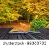 Autumn Fall forest coming out of pages in magic book - stock photo