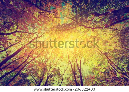 Autumn, fall trees. Sun shining through colorful leaves. Vintage photograph style - stock photo