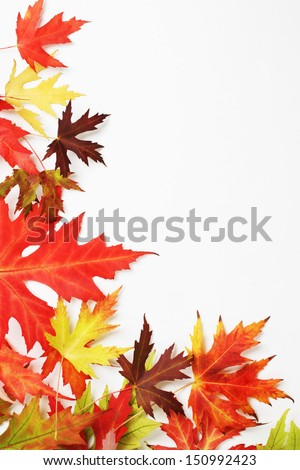 Autumn fallen colored leaves on white background - stock photo