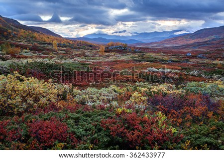 Autumn Fjell in Northern Sweden - stock photo