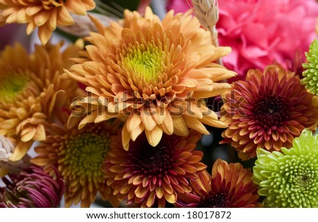 Autumn flowers ready for the holiday season. - stock photo