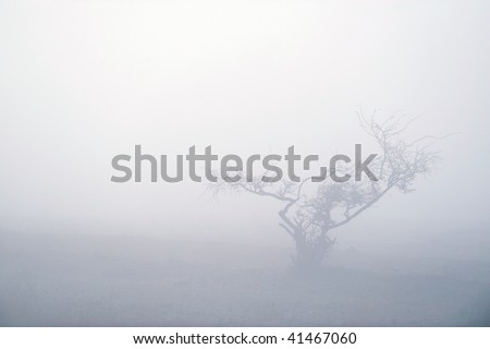 autumn foggy morning - stock photo