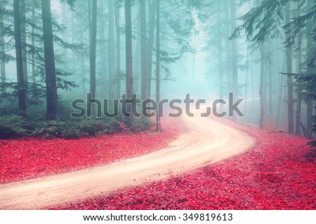 Autumn foggy mysterious forest with road. Beautiful colorful leaves on the forest road. - stock photo