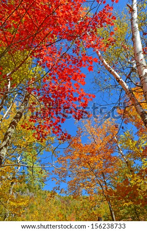Autumn Foliage: Fall Color in Forest - stock photo