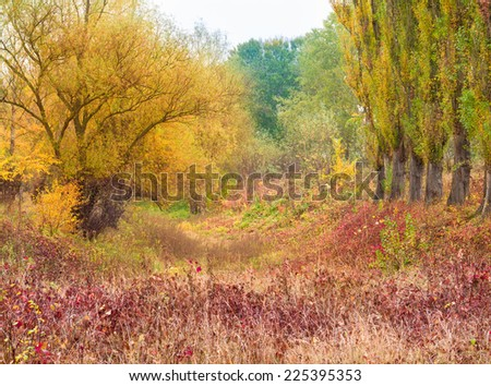 autumn forest after the rain - stock photo