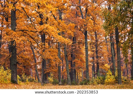 autumn forest background with beautiful trees - stock photo