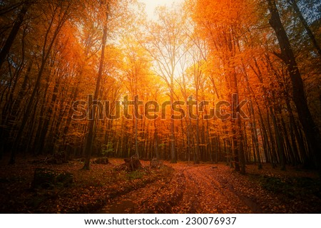 Autumn forest. Beautiful nature background. - stock photo
