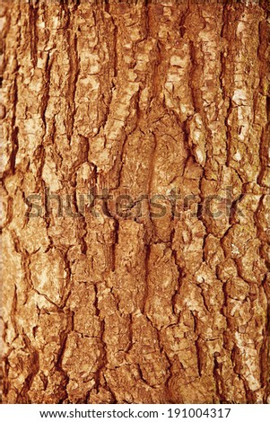 Autumn forest brown wooden fall background. Texture forest wooden stump in autumn leaves.  - stock photo