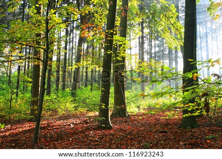 Autumn forest early in the morning sunlight - stock photo