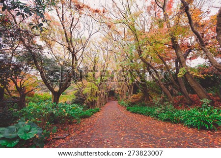 Autumn forest in Japan - stock photo