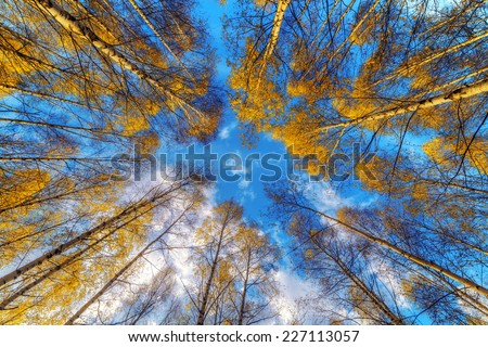 autumn forest in morning time - stock photo