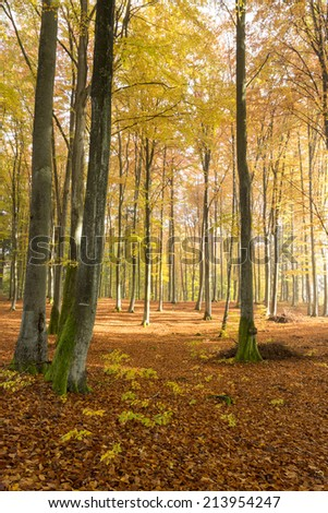 Autumn forest in north Poland - stock photo