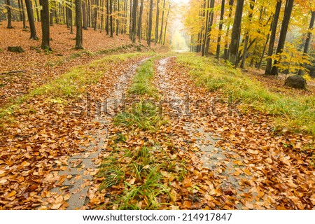 Autumn forest in north Poland/Forest Autumn Road - stock photo