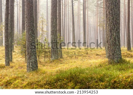 Autumn forest in north Poland.Pomerania province - stock photo
