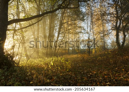 Autumn forest in north Poland.Pomerania province./ Rays of light - stock photo