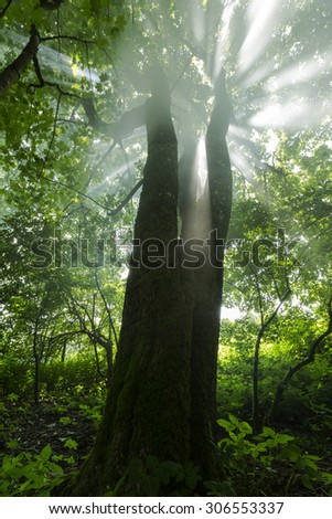 Autumn forest in north Poland.Pomerania province/Rays of light - stock photo