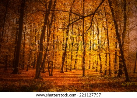 Autumn forest in sunset light. Beautiful nature background.  - stock photo