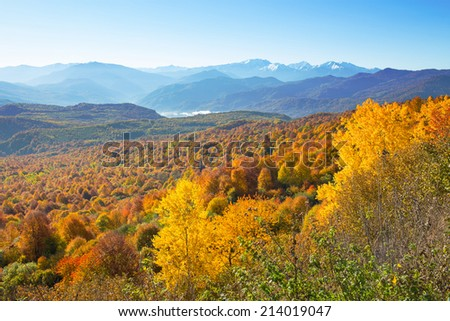 Autumn forest in the mountains - stock photo