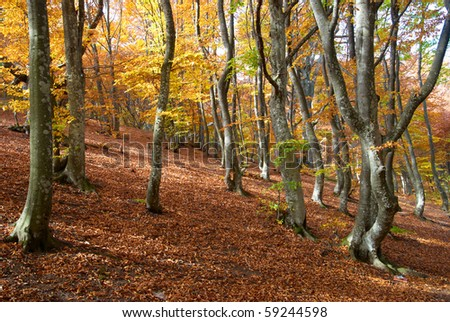 Autumn forest in the warm sunny day - stock photo