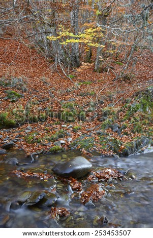 Autumn forest landscape with stream in Spain. Warm tone. Vertical - stock photo