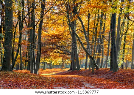 Autumn Forest. Park Road. Landscape with the autumn forest. Dry leaves in the foreground. Old trees. - stock photo