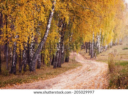 Autumn forest road between birch trees - stock photo