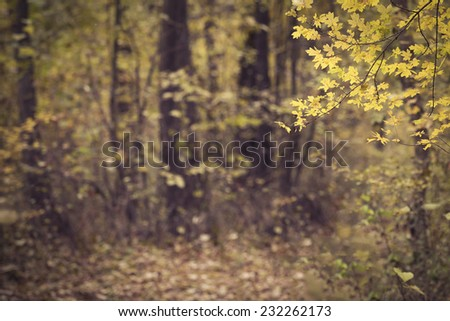 Autumn forest scenery selective focus - stock photo
