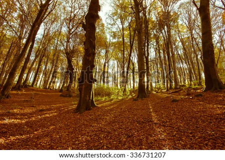 Autumn forest scenery with rays of warm light illumining the gold foliage , Monte Cimino, Lazio - Italy. - stock photo