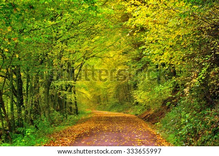 Autumn forest scenery with warm light illumining the gold foliage and a footpath leading into the scene - stock photo