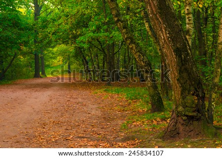 autumn forest, shot in the early morning - stock photo
