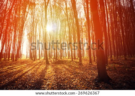 autumn forest trees - stock photo