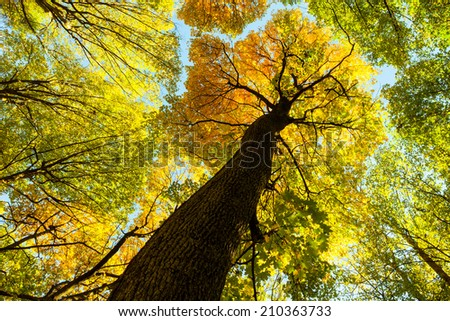 autumn forest trees. nature green wood sunlight backgrounds. .  - stock photo