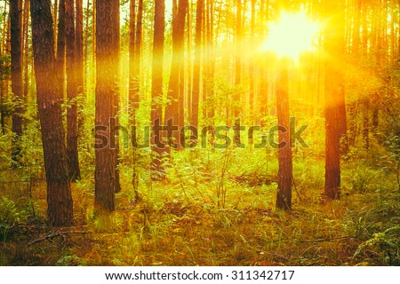 Autumn Forest Under Sunset Sunbeams. Autumn Deciduous Forest At Dawn Or Sunrise. Woods In Sunlight Colors.  Toned Instant Photo - stock photo