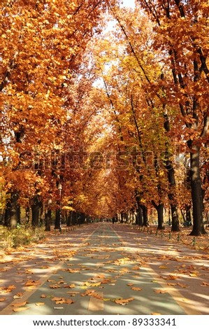 Autumn forest with a bike alley - stock photo