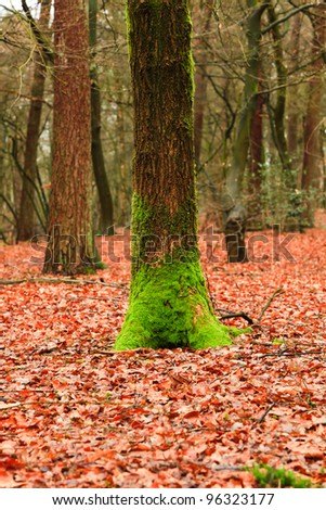 Autumn forest with orange yellow leafs and green moss - stock photo