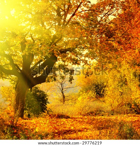 autumn forest with sun beam - stock photo