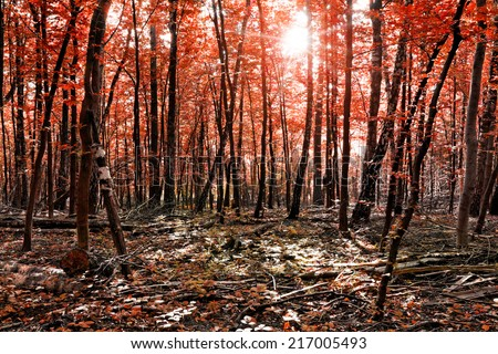 Autumn forest with sunrays in the morning  - stock photo