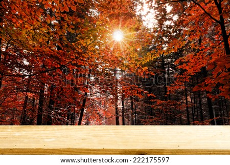 Autumn forest with sunrays in the morning board concept - stock photo