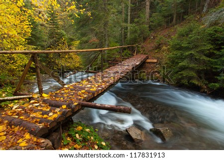 Autumn forest with wood bridge over creek in yellow maple forest - stock photo