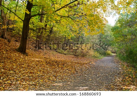 Autumn forest with yellow maple trees and colorful foliage in hiking trail, Toronto - stock photo