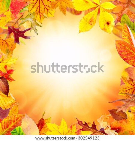 Autumn frame with falling leaves - stock photo