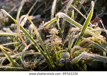 autumn frost - stock photo