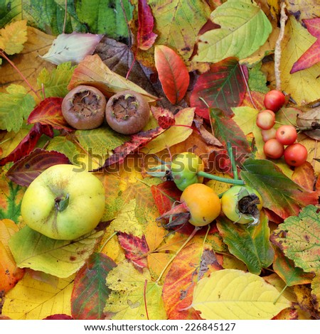 Autumn fruits and leafs - stock photo