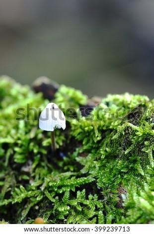 Autumn Fungi and the moss - stock photo