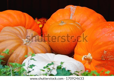 Autumn harvest of pumpkins - stock photo