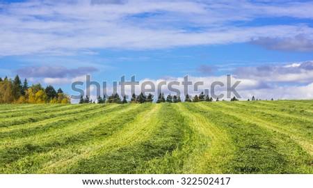 Autumn hay - stock photo