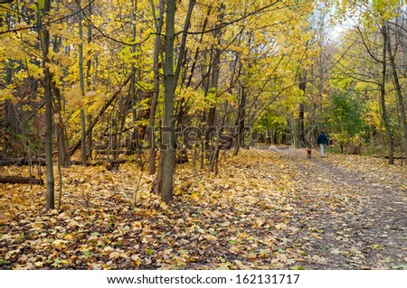 Autumn hiking trail with man and dog walking in distance, Toronto - stock photo