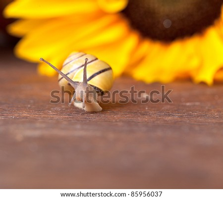 Autumn Image with small banded garden snails and Pumpkins - stock photo