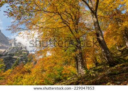 Autumn in Bavaria, Germany - stock photo