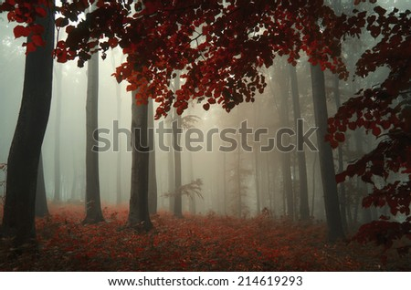 autumn in forest with colorful leaves - stock photo